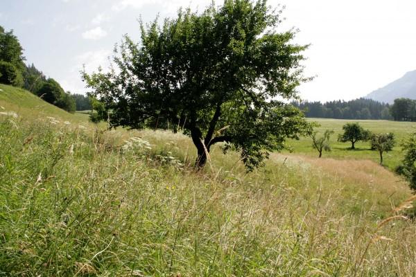 Blick auf das Grundstück in Richtung Osten